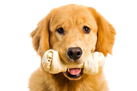 Dog with rawhide bone