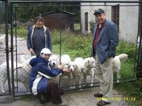 reputable-dog-breeders-by-slovenskycuvacusa-at-gmail.jpg
