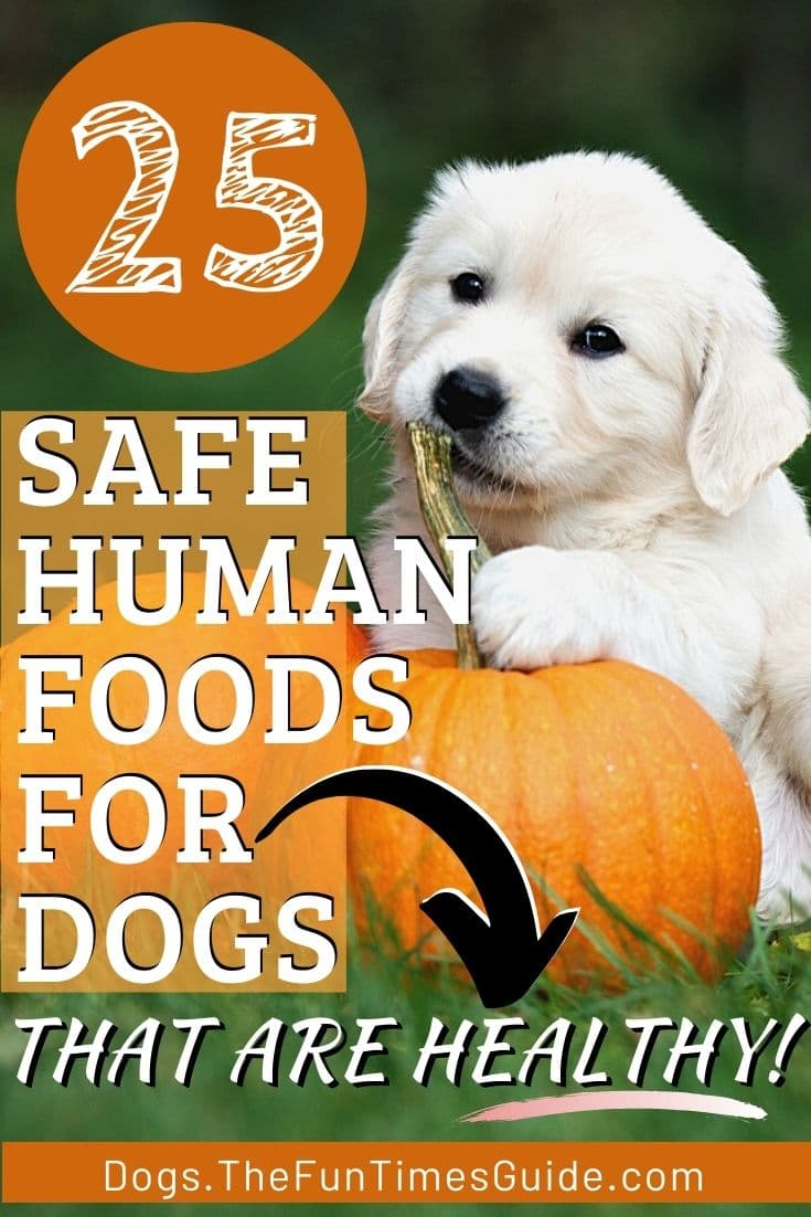 25 Human Foods That Are Good To Use As Dog Treats And Dog Chews... Because They\'re Healthy!