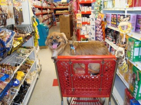 save-money-on-pet-food