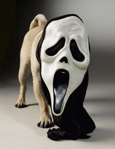 scary_hound_dog_wearing_scary_movie_mask.jpg