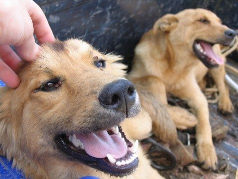 itchy dogs need to try this natural flea treatment for dogs