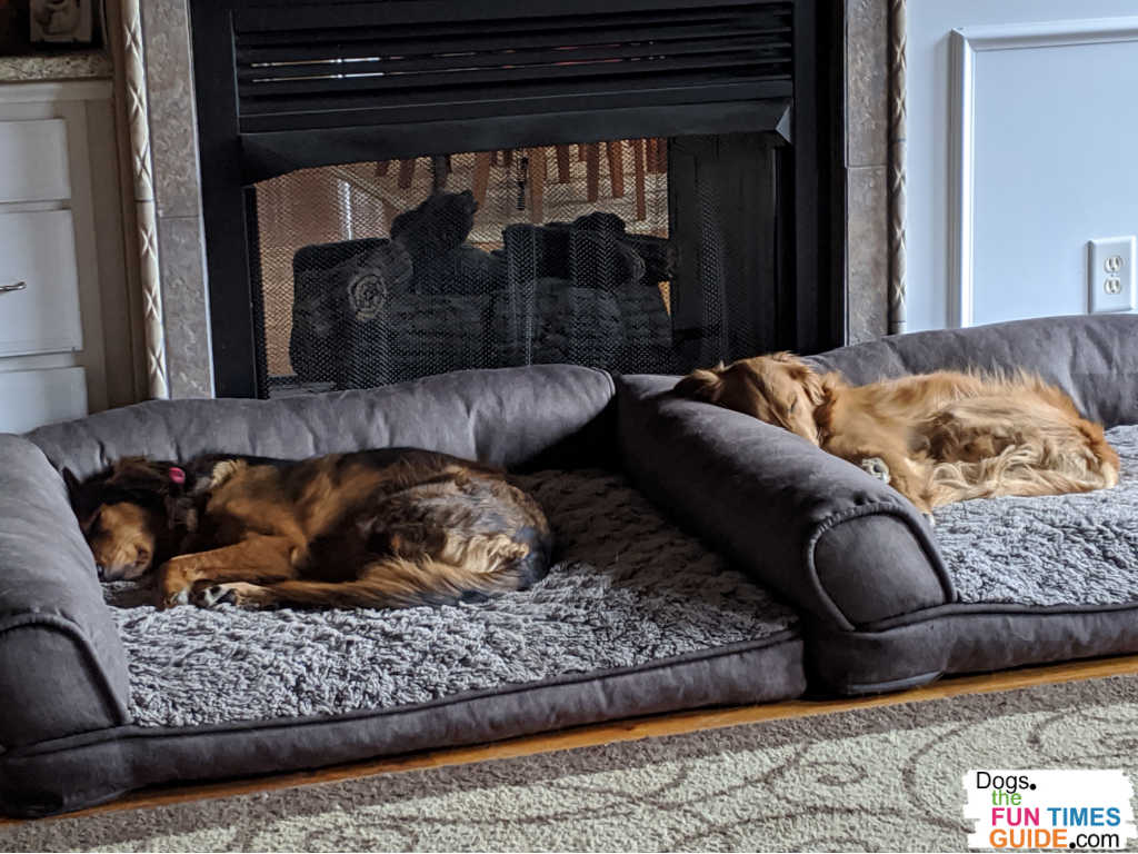Separate dog beds for two dogs