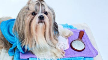 A Shih Tzu Dog's Coat Requires Special Care… Here's How To Brush A Shih Tzu, Remove Mats, Bathe A Shih Tzu, And Do A Top-Knot