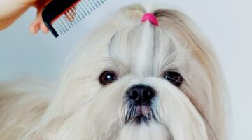 Shih Tzu Grooming Tools: See Which Dog Clippers, Dog Brushes, And Dog Combs Work Best On Shih Tzu Hair