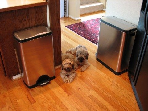 A couple of SimpleHuman dog proof trash cans.