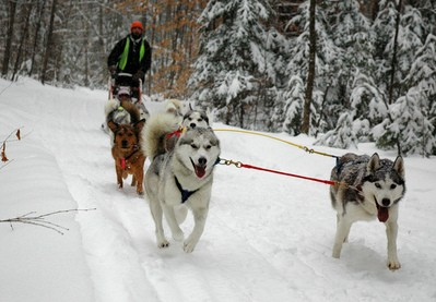 sled-dog-team-by-sponng.jpg