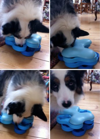 slow feed dog bowls for puppy hiccups