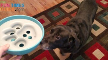 PAW5 Rock 'n Bowl Review: It's A Slow Feed Dog Bowl & Interactive Puzzle Toy For Dogs!