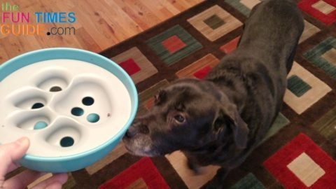 slow-feed-dog-bowl