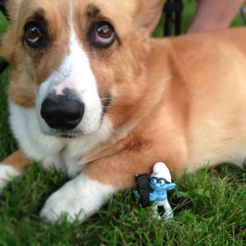 smurf-dog-costume-ideas