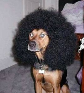 snoop-dog-wearing-afro-wig.jpg