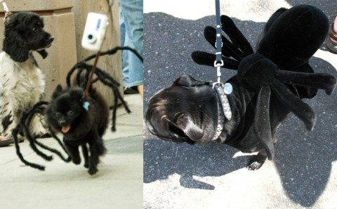 spider-dog-costumes