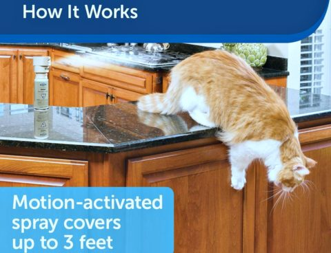 SSSCAT is a can of compressed air that is motion-activated to spray whenever your pet gets within 3 feet of it.