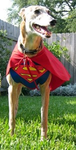 superman-dog-wearing-cape.JPG