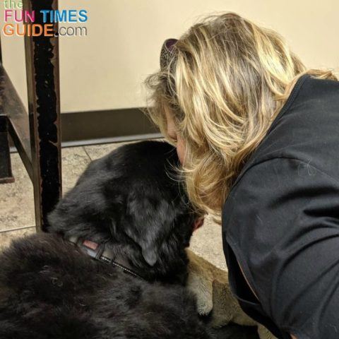 Dog euthanasia is a difficult but necessary time in a dog owner's life.