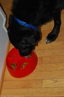 tenor-dog-using-dogpause-bowl.jpg