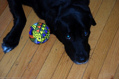 tenor-dog-with-splash-bomb-ball.jpg