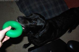 tenor-dogs-first-goughnuts-toy.jpg