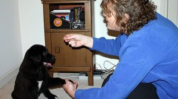High Five Dog Trick: How To Teach Your Dog What 'Toes' Means & How To 'Shake Hands' On Command