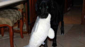 The Best Stuffed Dog Toy (…In The Eyes Of My Dog)