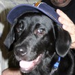 Pictures of Dogs Wearing Hats & Other Headwear