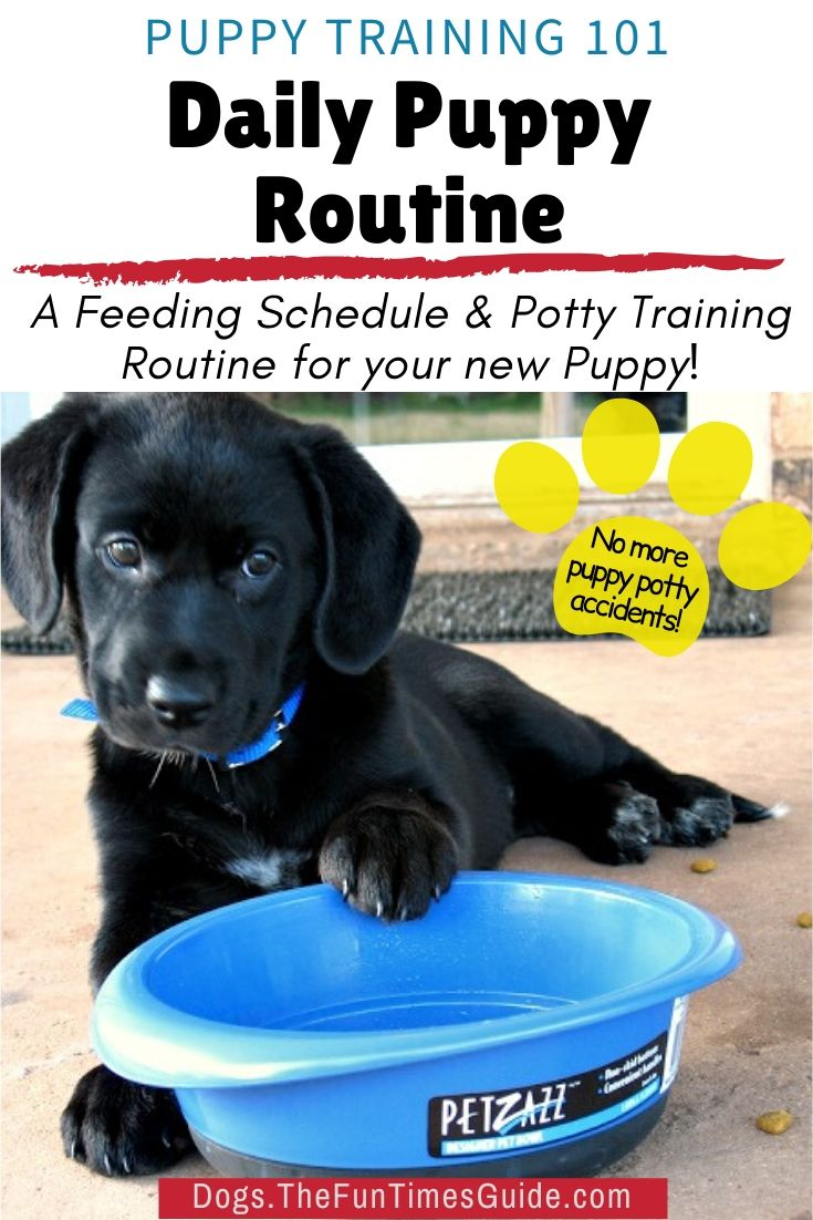 Do You Know How Often To Feed A Puppy Here S How To Create A Puppy Schedule For Daily Dog Feeding Watering Plus A Puppy Potty Training Schedule To Eliminate Accidents In
