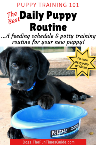 The best daily puppy routine for your new pet - feeding and potty training times.