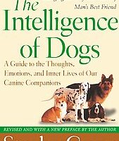 See Which Are The Most Intelligent Dog Breeds… Also The Least Intelligent Dogs