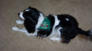 Therapy Dogs – Does Your Dog Have What It Takes To Get Therapy Dog Certification?