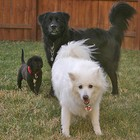 three-dogs-t-j-d.jpg