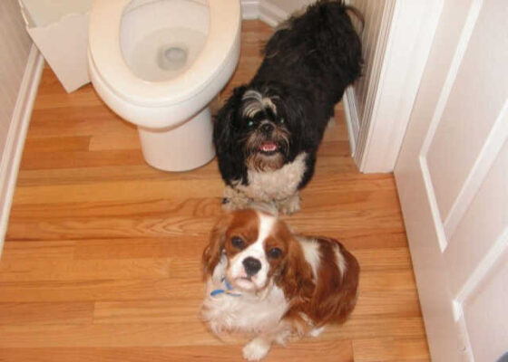 How to potty train dogs to prevent accidents in the house.
