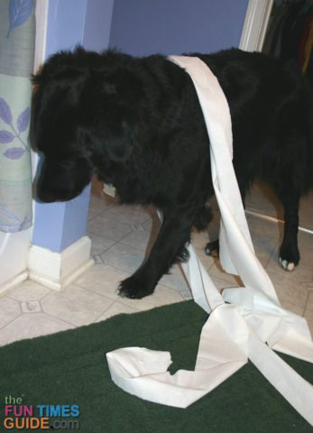 toilet-paper-dog