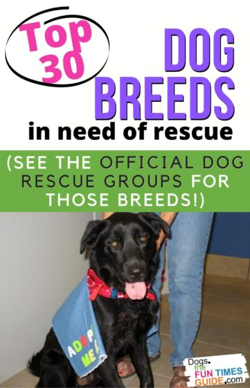 Top 30 dog breeds in need of rescue + The official dog rescue groups for those breeds!