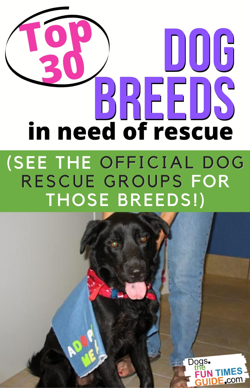 Rescue Dogs: The Top 30 Dog Breeds In Need Of Rescue In America... And The Official Dog Rescue Groups For Those Breeds