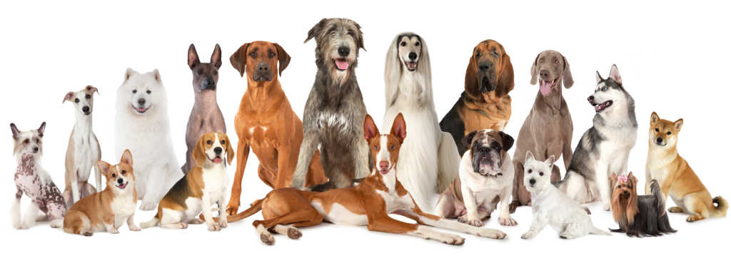 Most of these (but not all) are included on the Top Hypoallergenic Dogs list - See which ones!