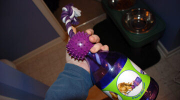 Tug-A-Jug: A Great Interactive Dog Treat Toy