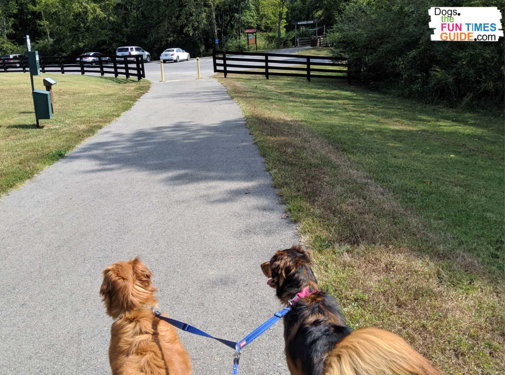 Walking two dogs is easier with a double dog leash. See my favorite ones.