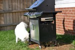 Two dogs around the grill. You can only see the reflection of one dog's tail ...a very tall, furry tail!