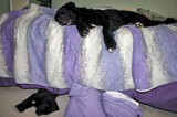 This is not the comforter I purchased... but it is a good example of how comfortable dogs think comforters are!