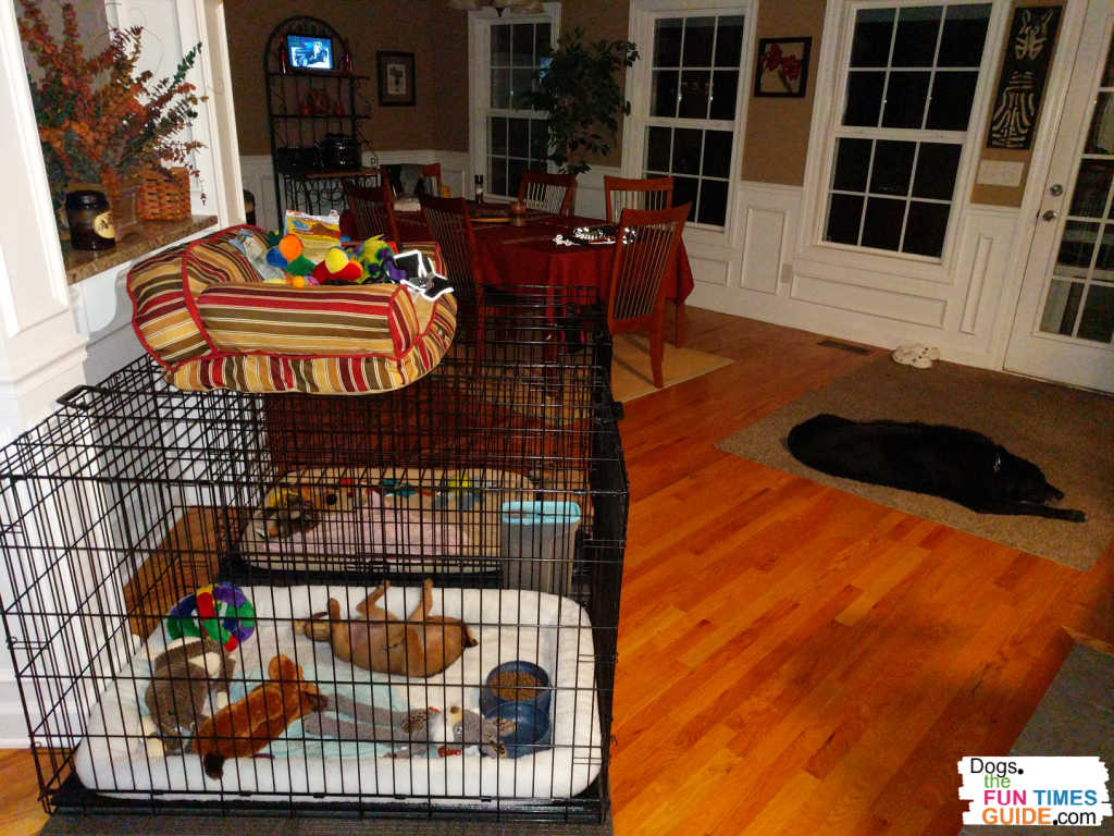 These are the 2 XL dog crates in our dining room for the puppies - and our senior dog sleeping on the rug.