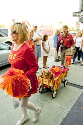 Matching Dog And Owner Halloween Costumes