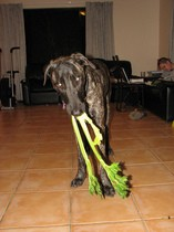 vegetarian-dog-eating-celery-by-robstephaustralia.jpg