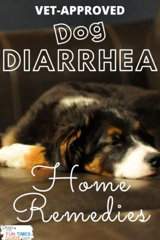 Vet approved dog diarrhea home treatment... that works!