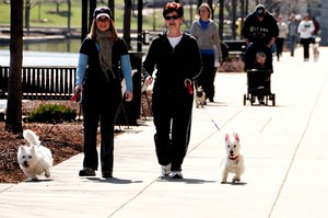 walking-dogs-by-valerie-everett.jpg