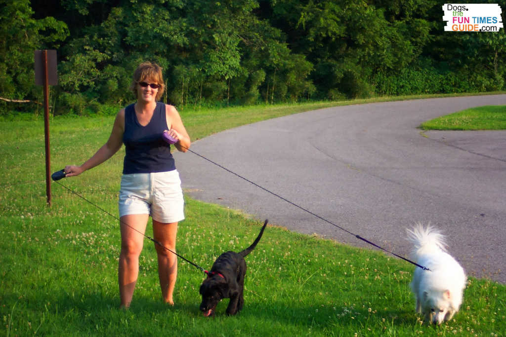 Walking two dogs can be a challenge at first.