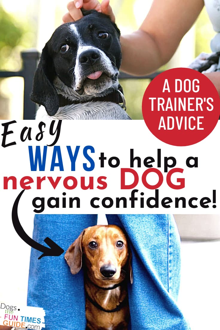 Have A Nervous Dog? 2 Ways To Help A Scared Dog Around Strangers + 3 Ways To Use Play, Exercise, Training (PET) Therapy To Make A Fearful Dog More Confident