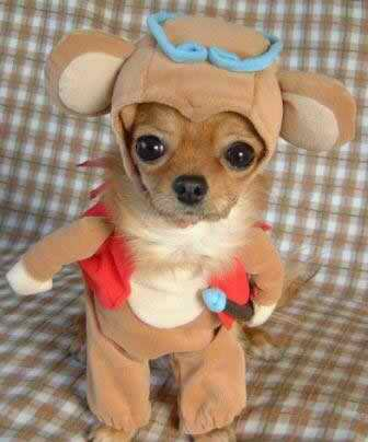 pictures of dogs wearing halloween costumes the dog guide - Dogs With Halloween Costumes On