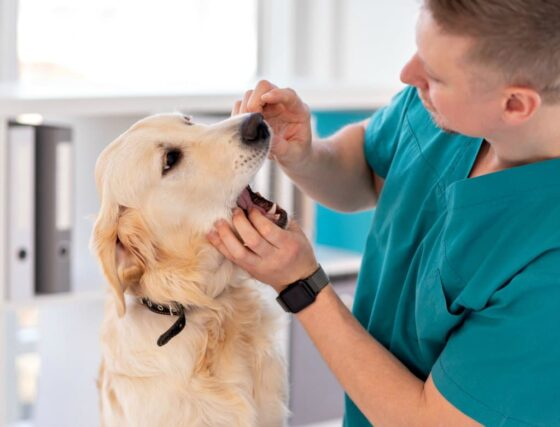 Veterinarian checking a dog's teeth.