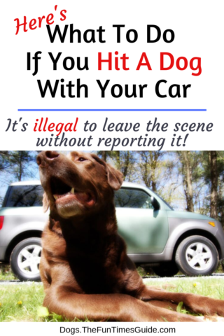 what's the law if you hit a dog with your car?